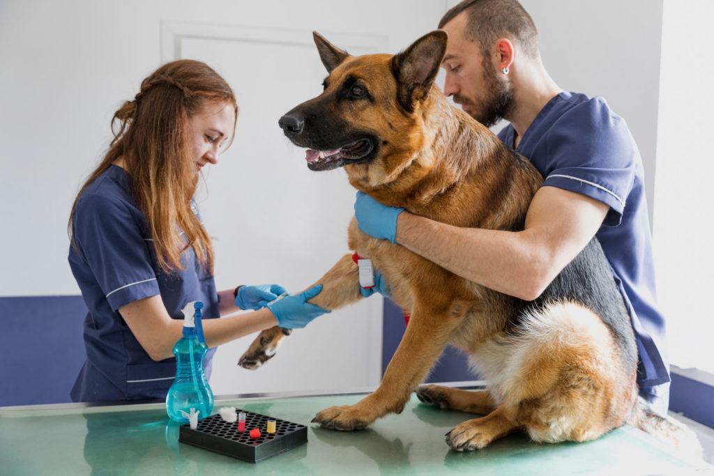 Estudiantes del curso de asistente de clínica veterinaria