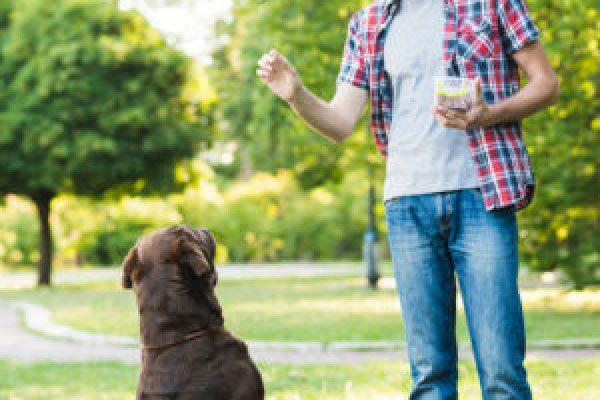 Practicas presenciales del Curso de adiestramiento canino