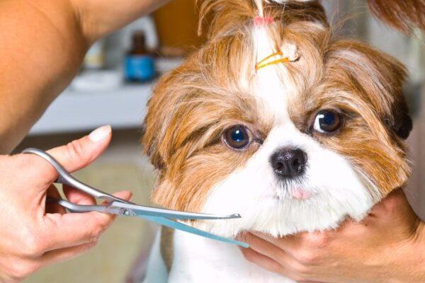 curso de peluquería y estética canina de ccc