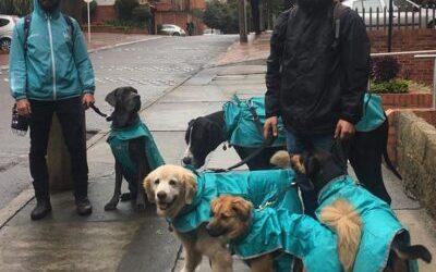 curso de adiestramiento canino bogota Practicas CCC Waggo